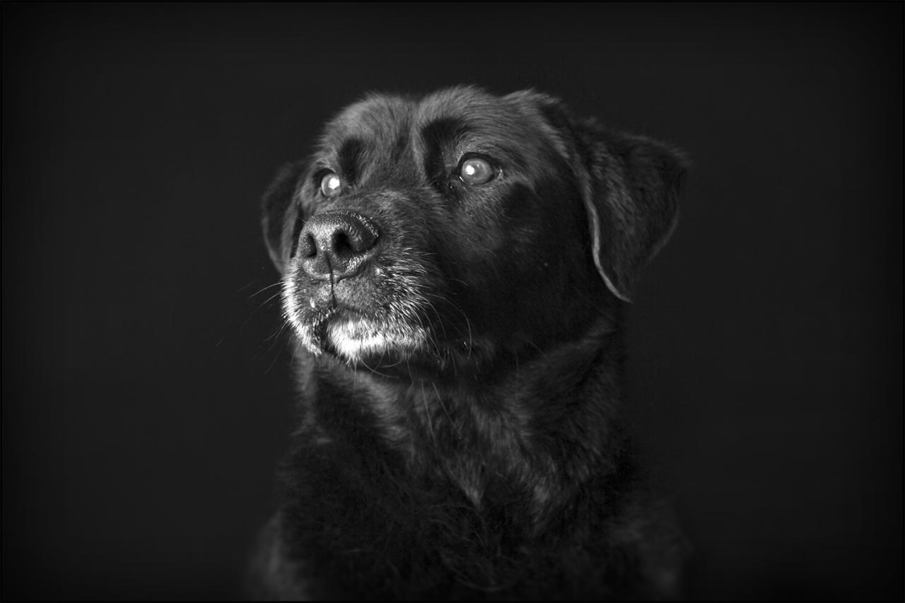 photographe chien toulouse